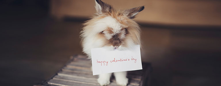valentine_bunny