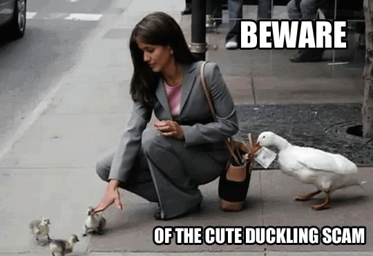 Beware of the cute duckling scam