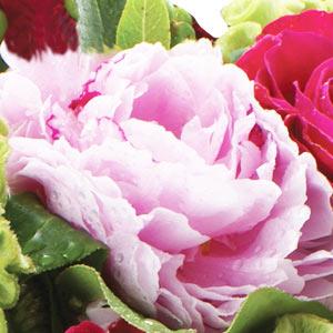 Valentines Flowers Peonies