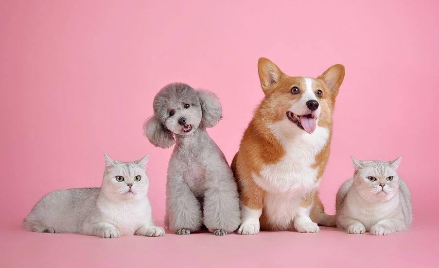 Pet Savings Blog Banner