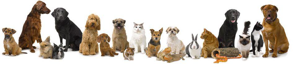 Pets at Pets at Home